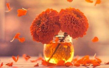 flowers, petals, vase, marigolds