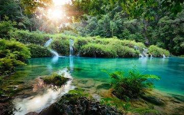 trees, river, nature, forest, landscape