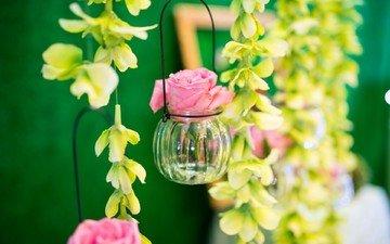 цветы, розы, бутон, баночка