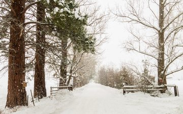 trees, snow, nature, winter, alley