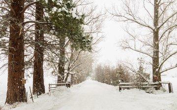 деревья, снег, природа, зима, аллея