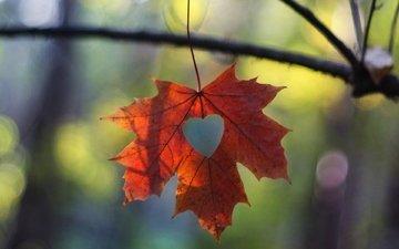 макро, ветки, сердечко, осень, лист