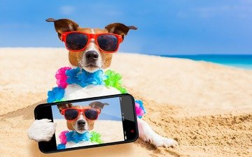 sea, sand, beach, muzzle, look, glasses, dog, humor, phone, selfie, jack russell terrier