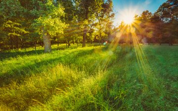 grass, trees, the sun, nature, forest, landscape, morning, summer, glade