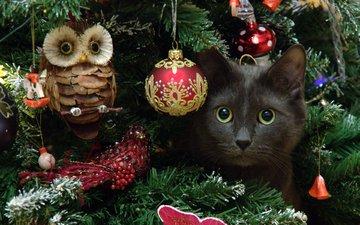 сова, новый год, елка, кот, мордочка, усы, кошка, взгляд, dmitriy ganich
