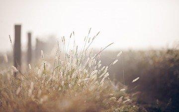 трава, макро, забор, размытость, колоски