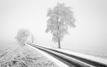 road, trees, snow, nature, winter, landscape, fog, frost, black and white, tom vocelka