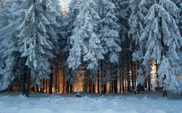 snow, nature, forest, winter, frost