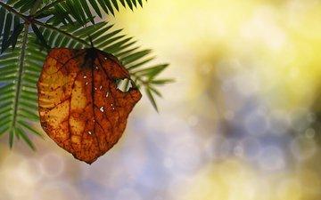 макро, осень, лист, веточка