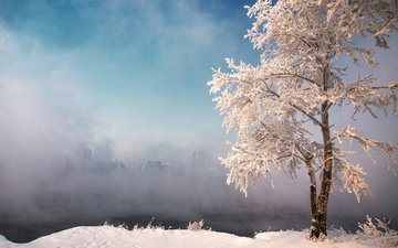 the sky, snow, nature, tree, winter, fog, frost