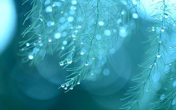 макро, капли, дождь, растение