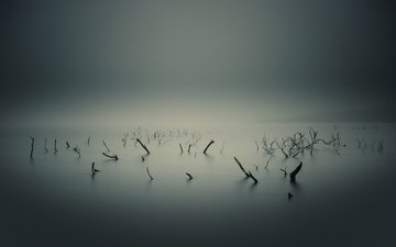water, nature, sea, overcast, driftwood