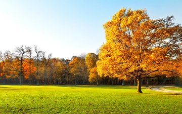 the sky, trees, nature, landscape, autumn, grass.