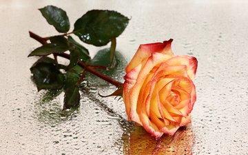 цветы, розы, композиции, натюрморты