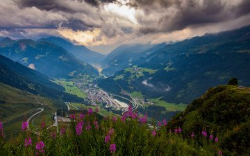flowers, mountains, greens, height, valley, pass