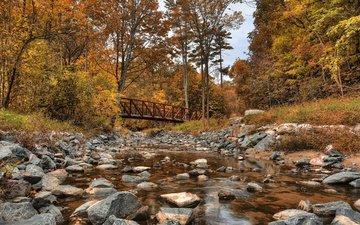 деревья, лес, мост, осень, речка, канада, wilket creek park