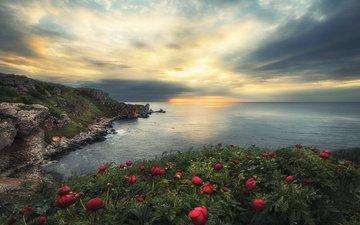 flowers, rocks, nature, landscape, sea, dawn, peonies, bulgaria