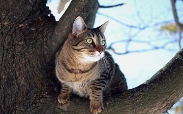 дерево, кот, мордочка, усы, кошка, взгляд