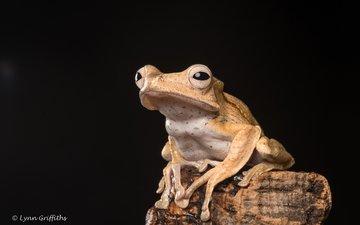 eyes, frog, black background, legs, lynn griffiths
