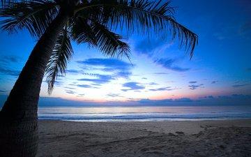 the sky, sea, sand, beach, the ocean, palma, tropics, overcast