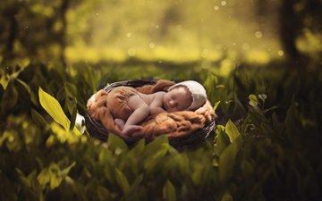 nature, leaves, summer, sleep, child, baby, cap, socket, bokeh, pants, ann podsiedlik