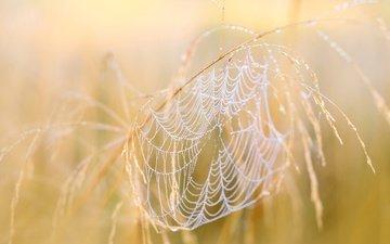 природа, макро, осень, паутина