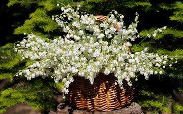 цветы, солнце, природа, цветение, сад, ландыши, весна, май, дача, нфд
