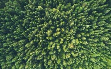 деревья, природа, лес, вид сверху