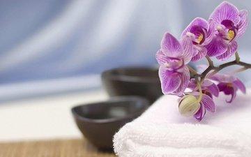цветы, макро, орхидея