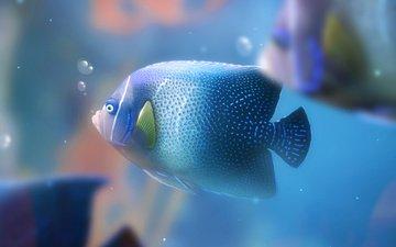 пузыри, аквариум, рыба