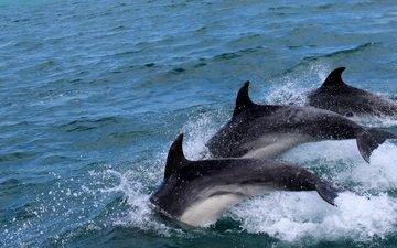 вода, море, брызги, дельфины