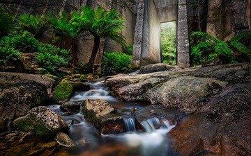 река, природа, лес, водопад, пальмы, папоротник