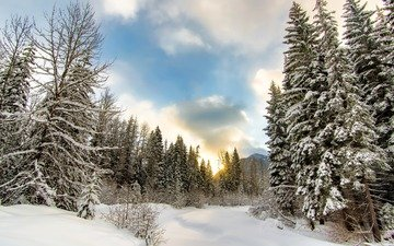 the sky, clouds, trees, snow, nature, forest, winter