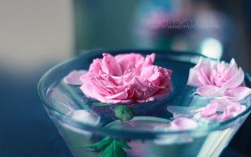 цветы, вода, розы, лепестки, wihad