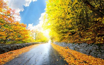 road, nature, forest, park, autumn