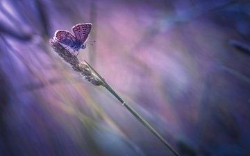 насекомое, бабочка, крылья, размытость, травинка