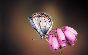 арт, насекомое, бабочка, крылья, цветочек, monteillard-damien