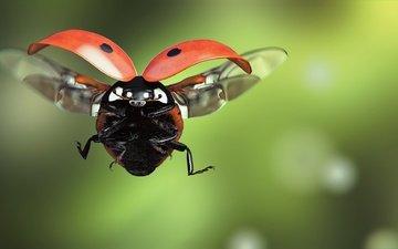 art, insect, flight, wings, ladybug, monteillard-damien