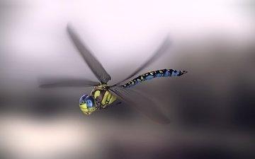 арт, насекомое, фон, крылья, стрекоза, monteillard-damien