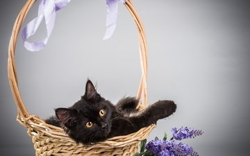 цветы, фон, кот, кошка, корзина, сирень