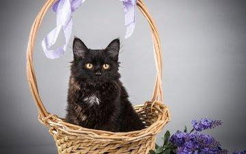 цветы, кот, кошка, черный, корзина