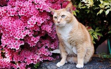 глаза, цветы, кот, усы, кошка, взгляд