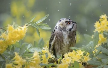 flowers, owl, nature, leaves, branches, drops, bird, birds of the world, tanja brandt