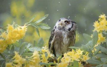 цветы, сова, природа, листья, ветки, капли, птица, птицы мира, tanja brandt
