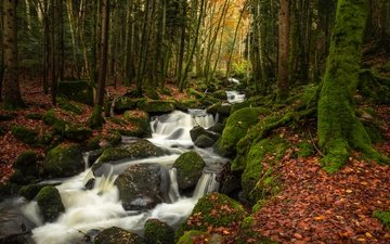 trees, stones, forest, leaves, stream, autumn, moss, france, river, cascade, auvergne