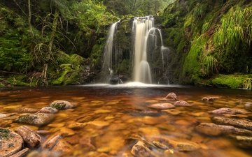 trees, stones, greens, forest, stream, waterfall, moss, germany, ruhestein
