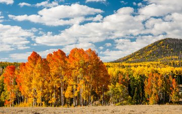 trees, forest, leaves, autumn, hill