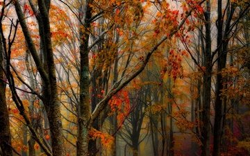 trees, forest, trunks, autumn