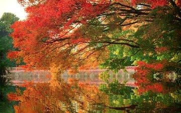 trees, lake, reflection, park, branch, autumn