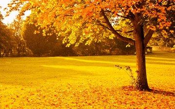 деревья, природа, парк, листва, осень